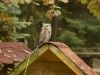 bsv-greifvogelgehege-0009