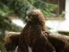 bsv-greifvogelgehege-0079