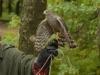 bsv-greifvogelgehege-0046