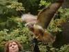 bsv-greifvogelgehege-0048