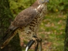 bsv-greifvogelgehege-0052