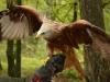 bsv-greifvogelgehege-0062